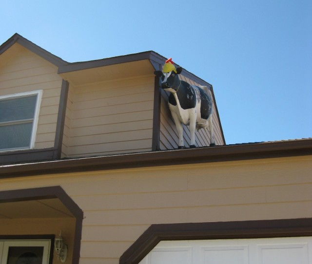 Life-sized cow on house roof